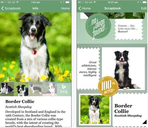 Fetch : l'application qui permet de connaître la race d'un chien