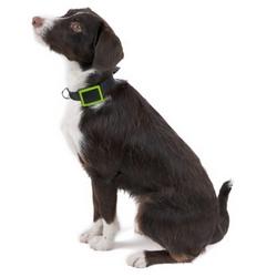 Le collier connect� Weenect Pets est disponible chez SFR